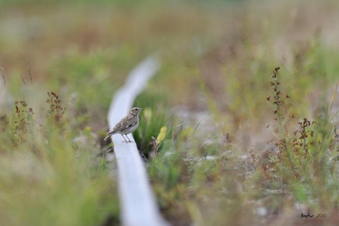 Asserans, mon paradis ornithologique.