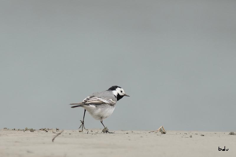 Sur les bancs de sable du Rhône