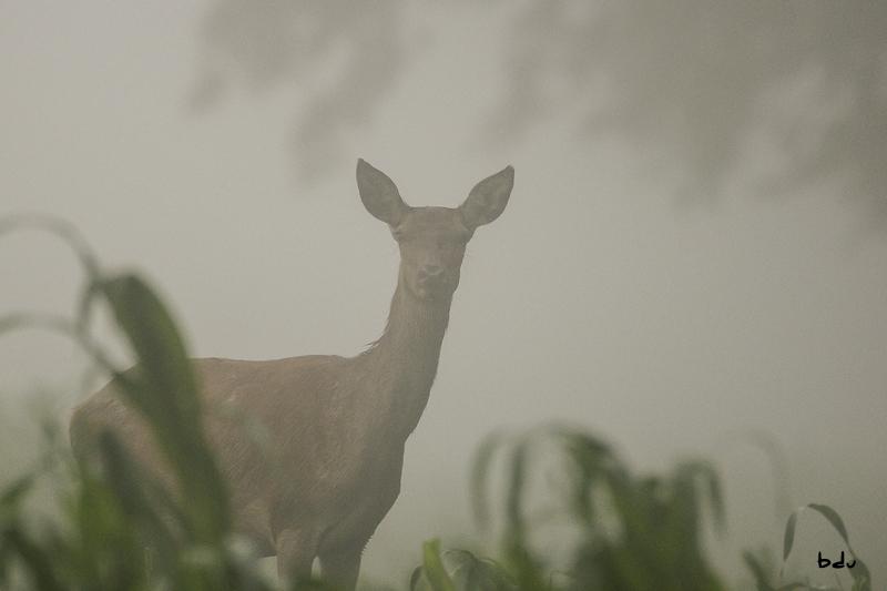 Les biches et le brouillard