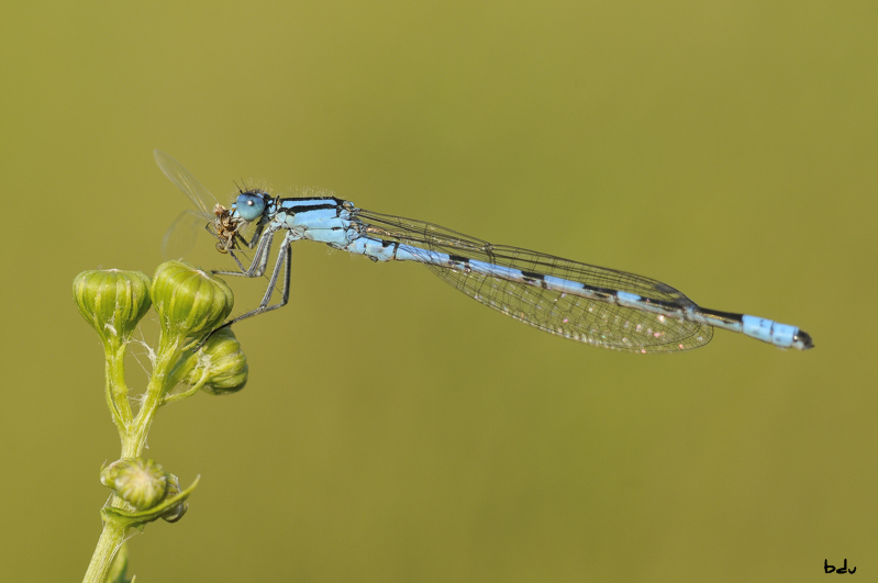agrion_porte_coupe31-1