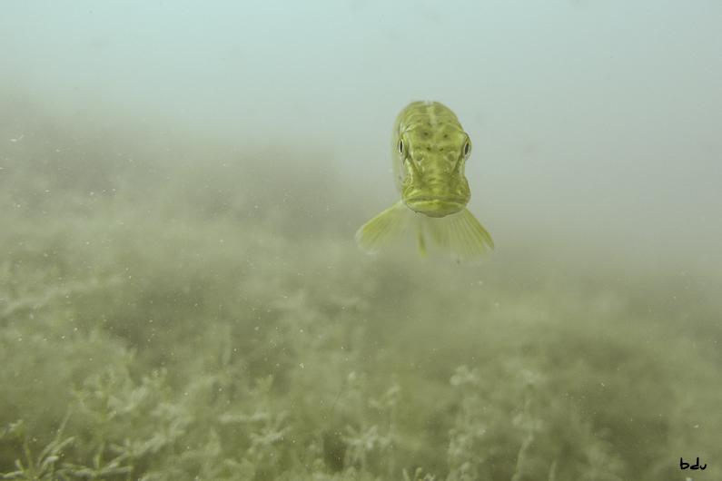 Dans les eaux du lac