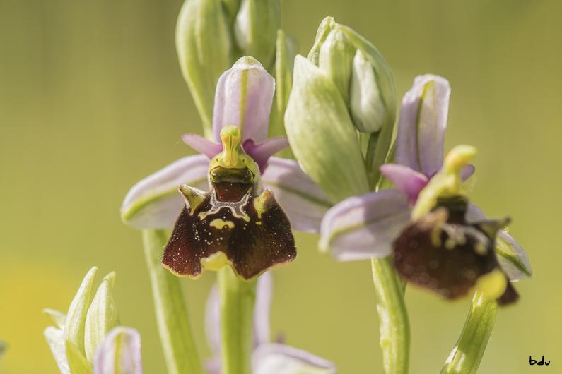 Mai le mois des orchidées